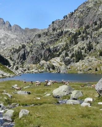 Subvencions a projectes d'investigació científica a la Xarxa de Parcs Nacionals 2020