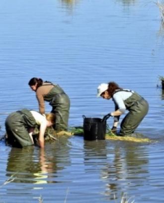 Píndola formativa sobre voluntariat ambiental el 26 de setembre amb el COAMB