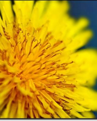 Flor. Voluntariat social. Font: _Hadock_ a Flickr